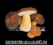 Белые грибы целые свежие