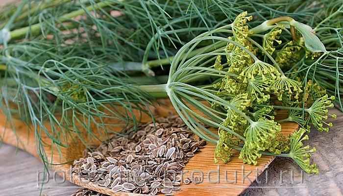 Зелень и семена укропа