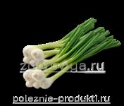 Лук зеленый для салата