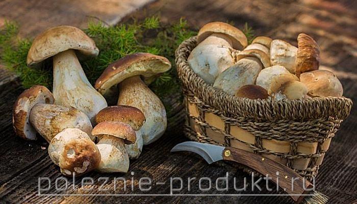 Свежие белые грибы
