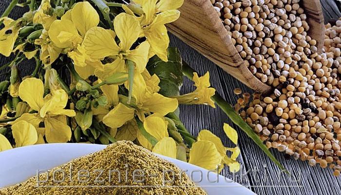 Горчичный порошок цветы и зерна